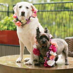 Incorporating Pets At Weddings