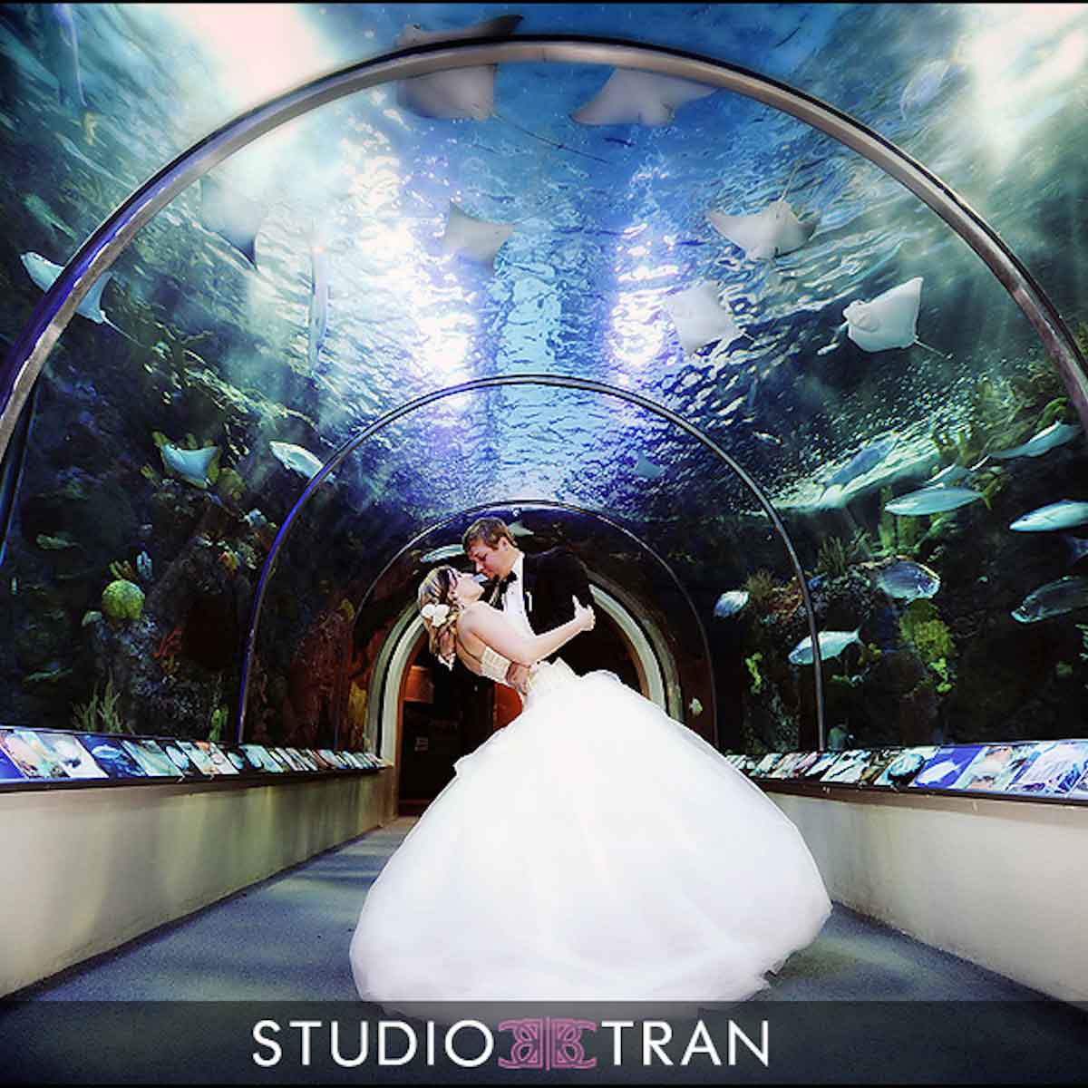 Newlyweds dip and kiss under the Aquarium's arched tank. Photo: Studio Tran