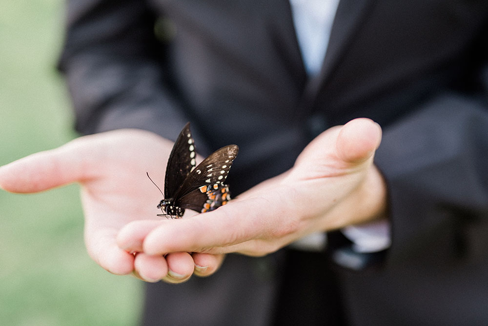 a butterfly landed on the groom's hands