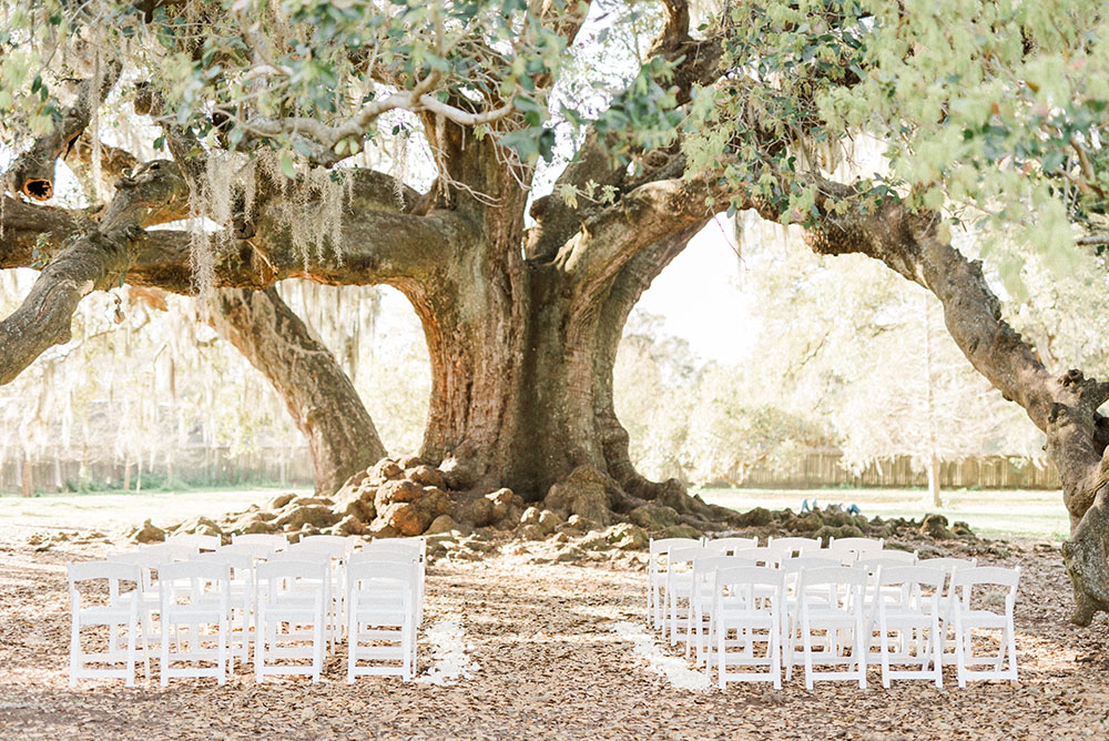 tree of life outdoor wedding ceremony new orleans